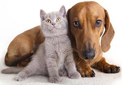 رقابت جالب سگ و گربه در عبور از موانع + فیلم