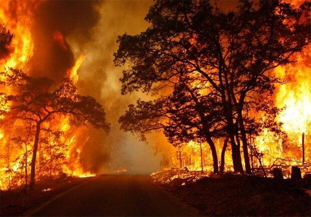 آمادگی کامل ستاد مدیریت بحران برای پیشگیری از آتشسوزی جنگلها