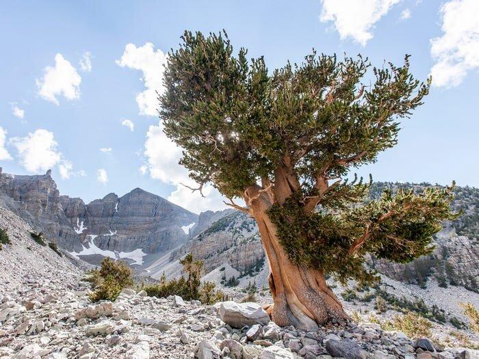 زیباترین و بکرترین کویرهای جهان؛ روی دیگری از جذابیت طبیعت + تصاویر