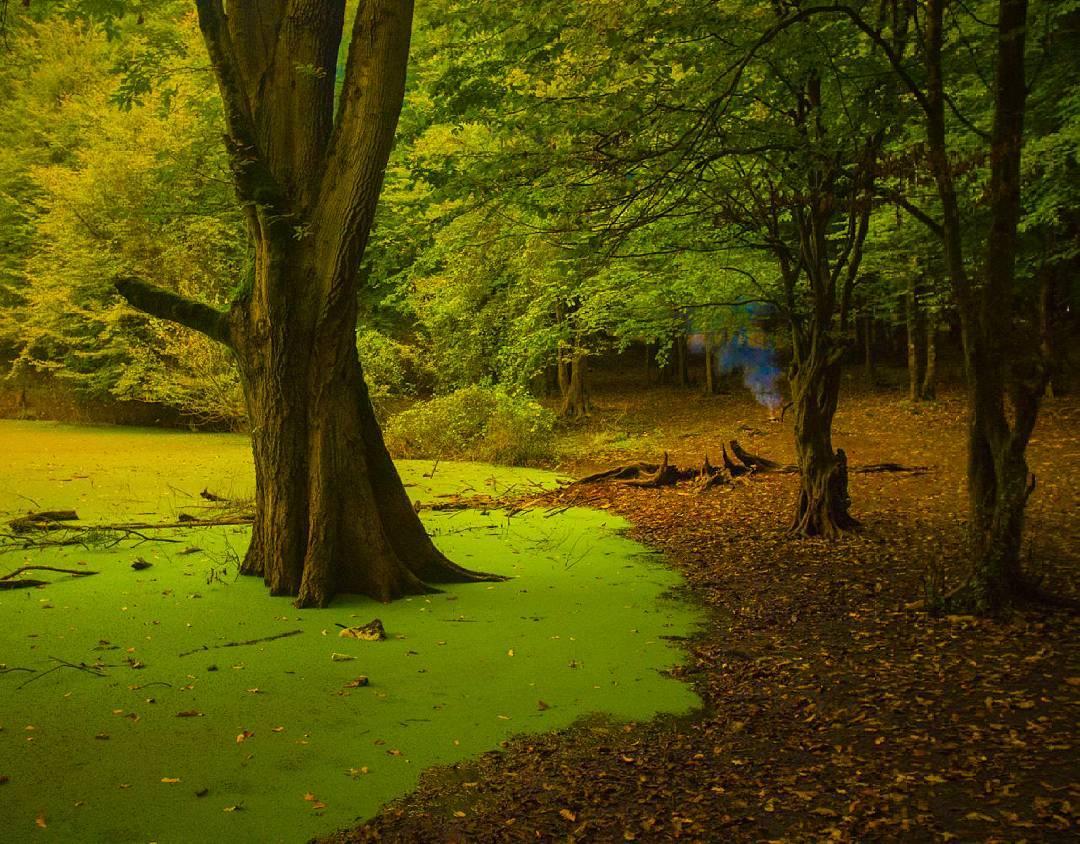 هسل؛ جواهری درخشان در آغوش جنگل
