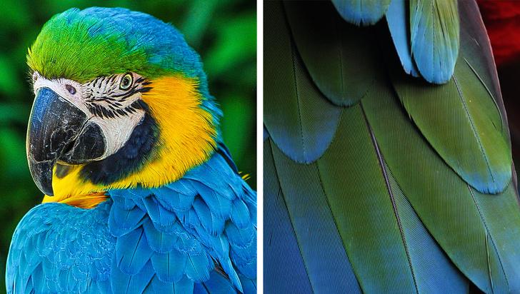 چرا رنگ آبی در طبیعت کمیاب است؟