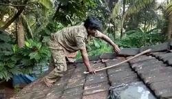 پنهان شدن مار کبرا در سقف خانه روستایی!