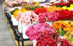 بازار گل در رکود است/  افزایش قیمتی برای گل در عید فطر نداریم