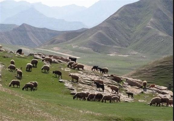 اجاره مراتع در همدان ممنوع است