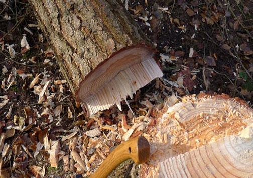 ذبح درختان با وعده پوچ/ ۲ سال چشمانتظاری برای پارک بانوانی که ساخته نشد