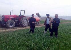 کشاورزان زنجانی نسبت به پایش مزارع گندم اقدام کنند