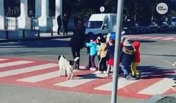 صحنه عجیب اعتراض سگ به راننده متخلف!