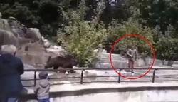 اقدام احمقانه گردشگر در باغ وحش!