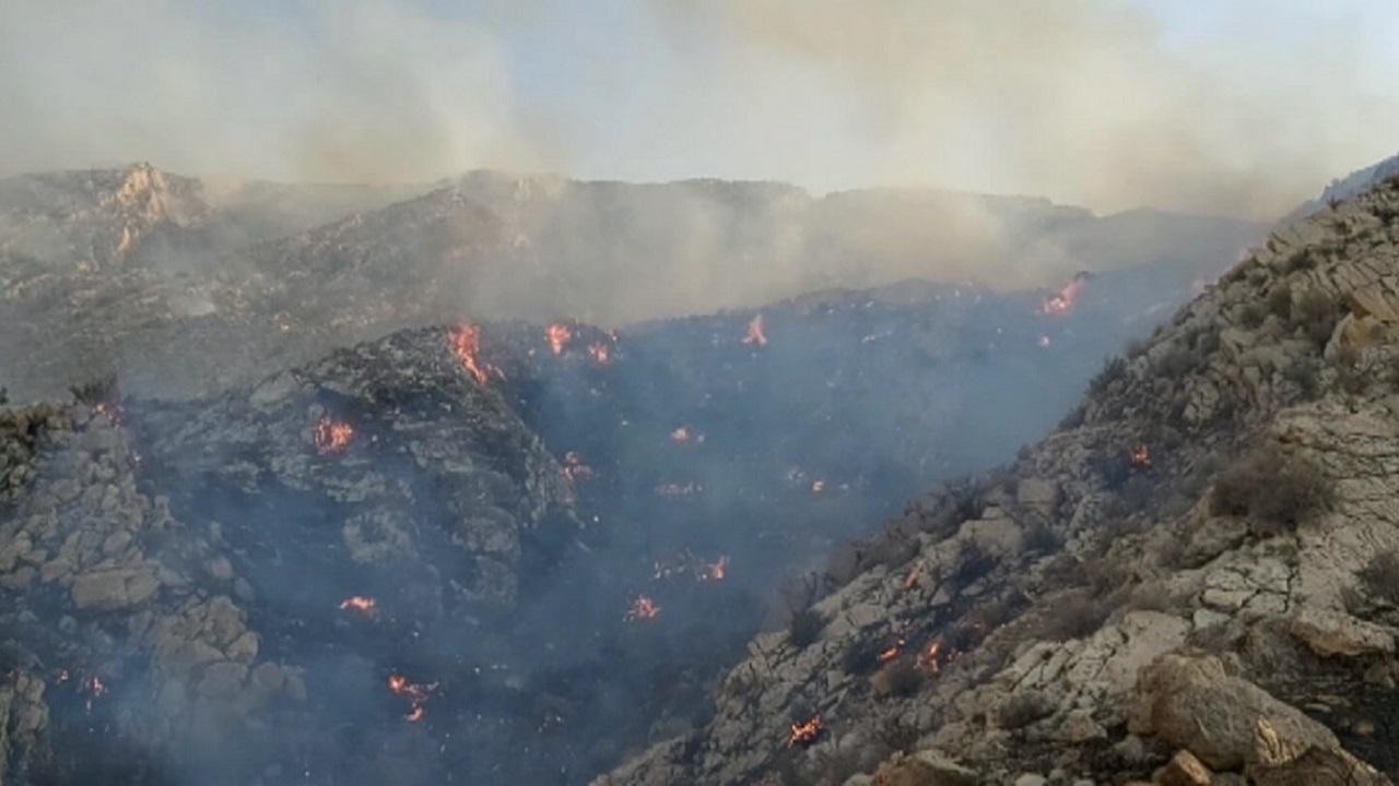طبیعت دشتستان و تنگستان در آتش خطای انسانی سوخت