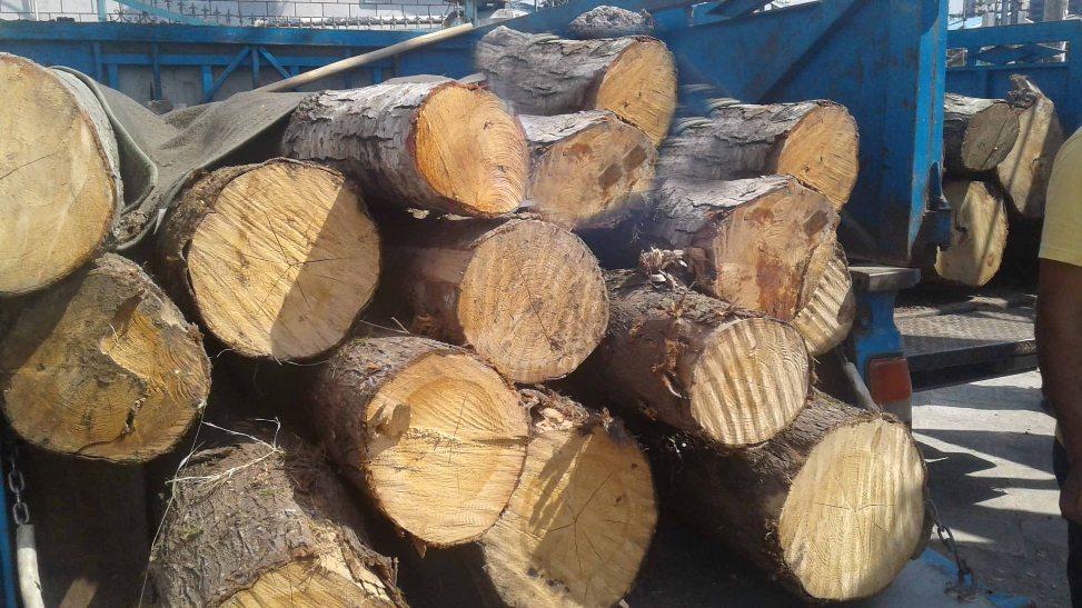کشف بیش از ۷ تن چوب جنگلی قاچاق در فومن