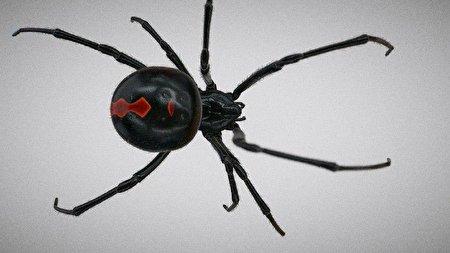 عنکبوت ایرانی که از نگاه رسانههای خارجی شبیه جوکر است! + عکس