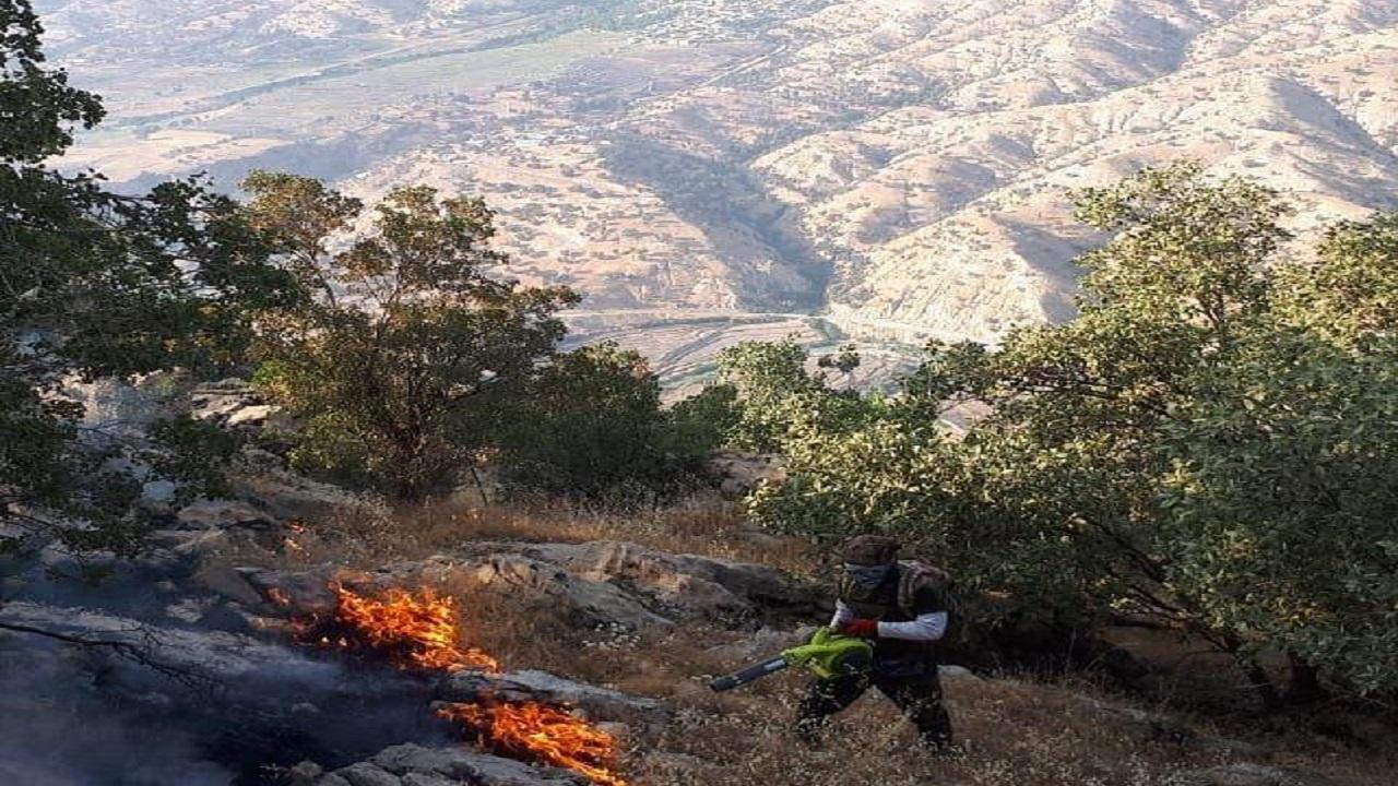 آتشسوزی در کوههای زاگرس + فیلم