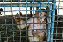 اسارتگاهی به نام باغ وحش هویزه/ حیوانات رنجور رو به موت