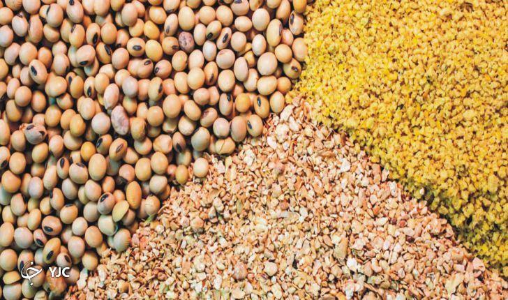 پشت پرده افزایش قیمت مرغ در اصفهان چیست؟