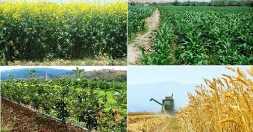 افزایش ۲۳ درصدی تولید محصولات زراعی در کشور