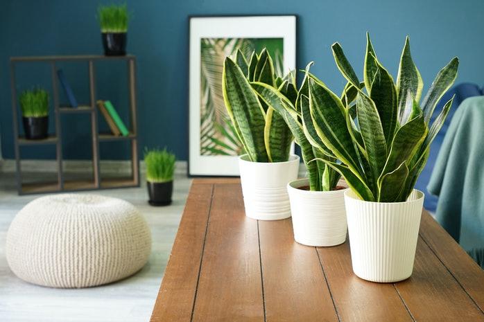 انتخاب گیاه آپارتمانی بر اساس ماه تولد