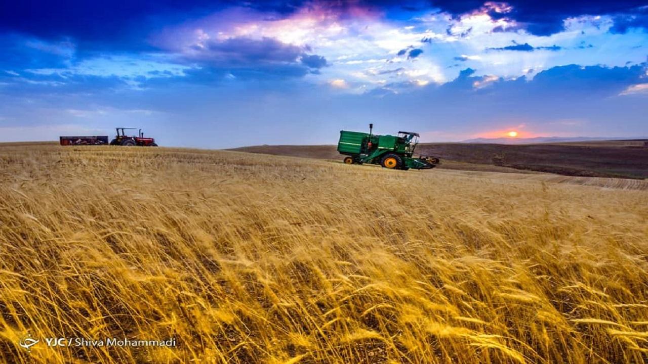 خودکفایی محصولات کشاورزی مستلزمحمایت همه جانبه /بیشتر کشاورزان محکوم به کاشت گندم هستند