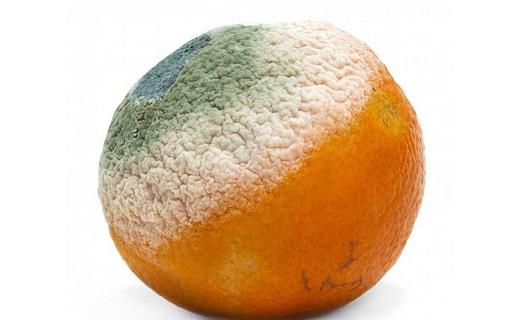 پرتقال کپکزده