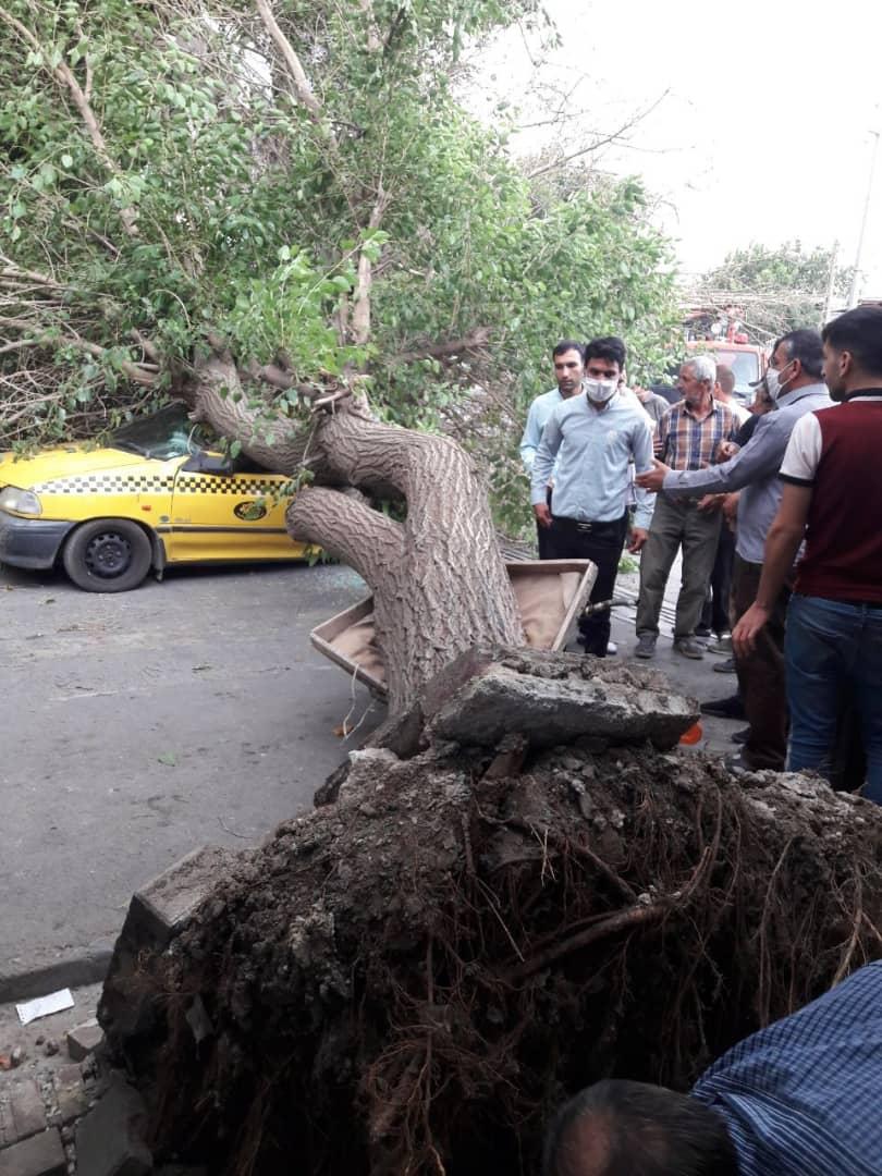 سقوط درخت در میدان غدیر اسدآباد تاکسی را له کرد