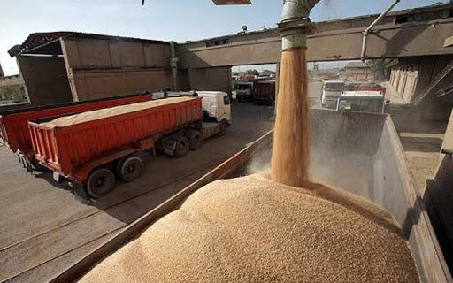 پیش بینی خرید تضمینی۴۰ هزار تن گندم در اسدآباد