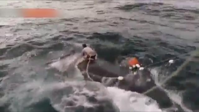 نهنگ بالندار