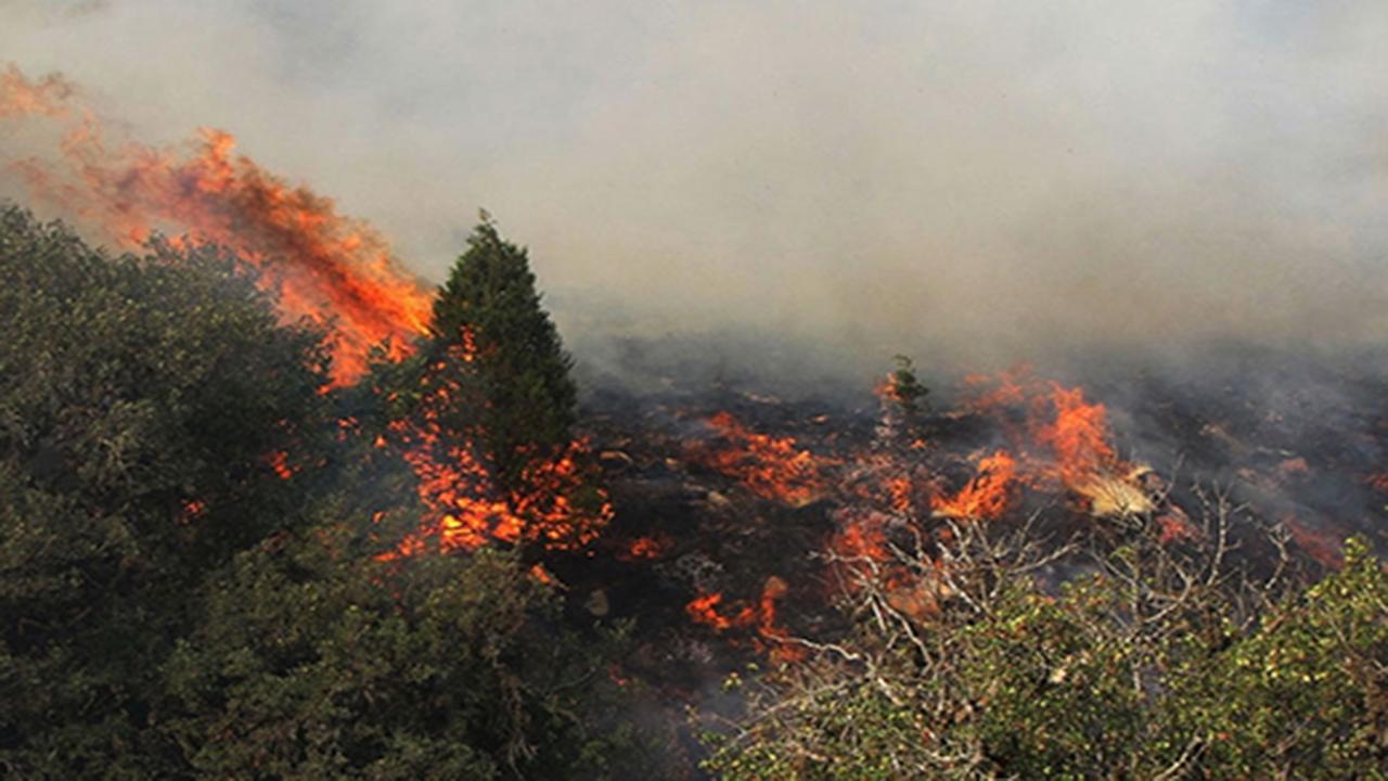 آتش سوزی در جنگلهای بلوط بلند شهرستان اردل
