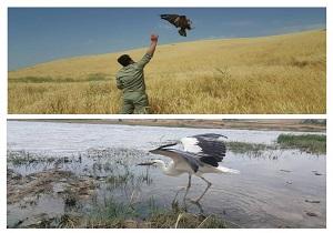 بازگشت پرندگان به دامن طبیعت