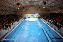چرا تنها دلفین بازمانده برج میلاد در ایران نگهداری نمیشود؟/ دستهای پشت پرده برای انتقال کاسیا به دریای سیاه