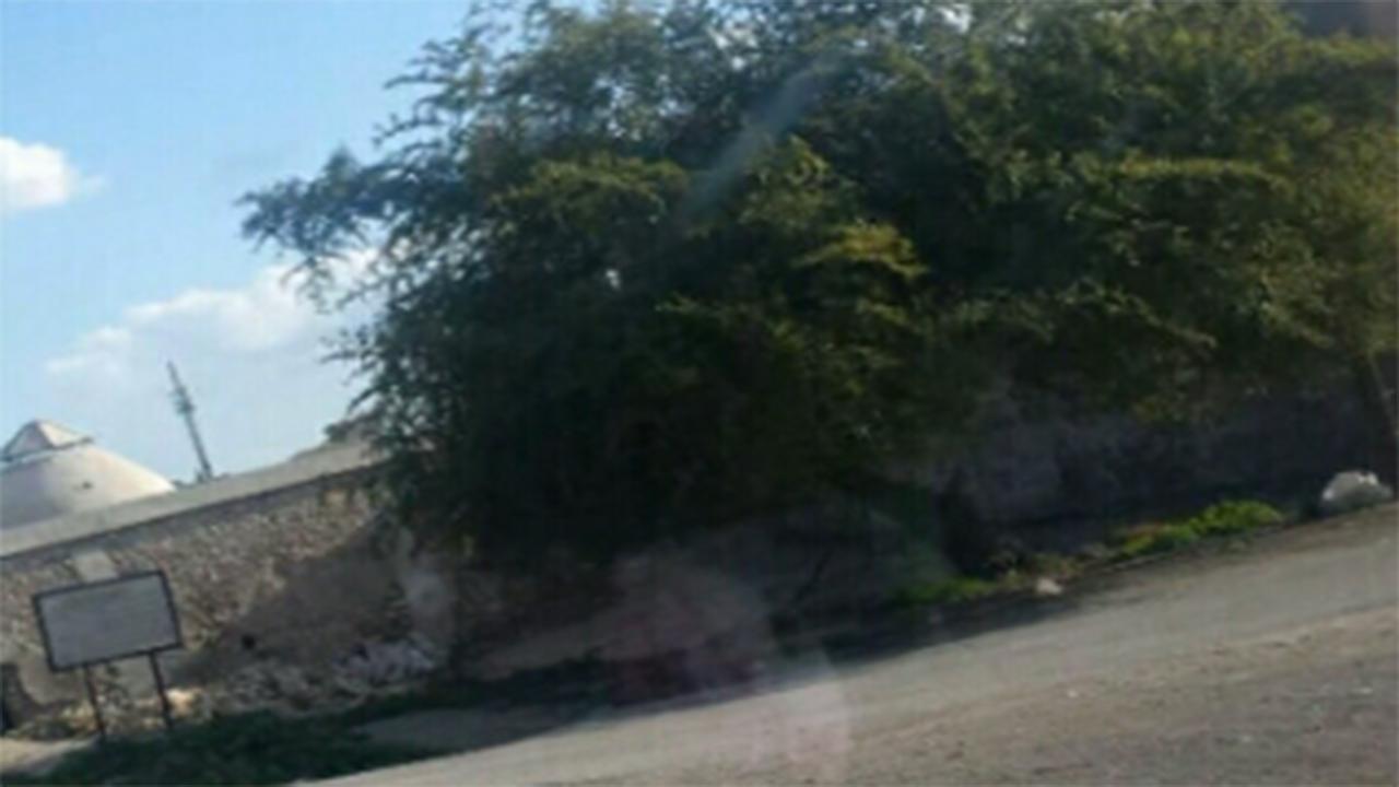 درخت کُنار روبروی اثر ملی حمام ملابابا در کازرون