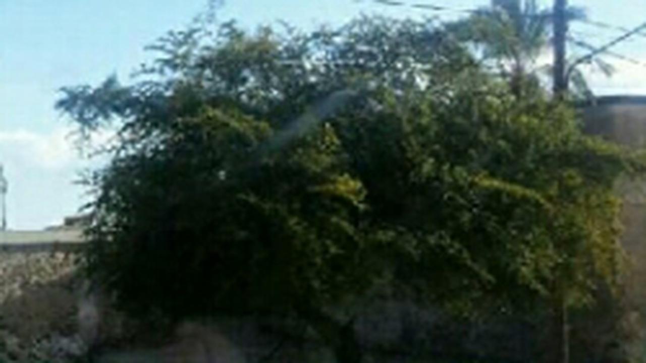 درخت کهنسال حمام ملابابا