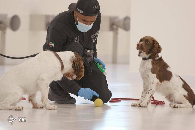 استفاده از سگهای پلیس در امارات برای تشخیص مبتلایان به کرونا+ تصاویر و فیلم