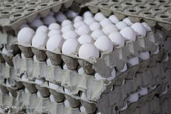 عقبگرد در صادرات تخم مرغ؛ تورم گریبان تخم مرغ را هم گرفت