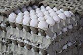 باشگاه خبرنگاران - عقبگرد در صادرات تخم مرغ؛ تورم گریبان تخم مرغ را هم گرفت