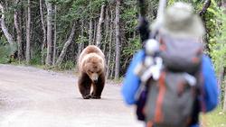 لحظه وحشتناک حمله خرس خشمگین به مرد رهگذر