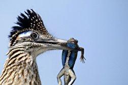 باشگاه خبرنگاران - برندگان مسابقه عکاسی Audubon ۲۰۲۰