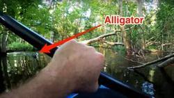 لحظه نفس گیر افتادن مرد قایق سوار به داخل رودخانه بر اثر حمله تمساح + فیلم