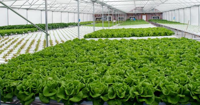 مجتمع گلخانهای منطقه آزاد ارس در بین ۱۰ گلخانه برتر دنیا است