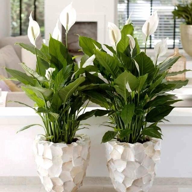 خنک کننده و گیاهان