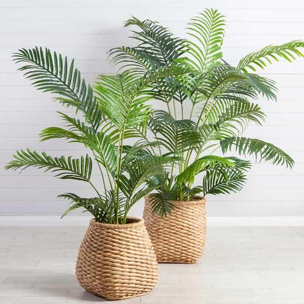 گیاه خنک کننده