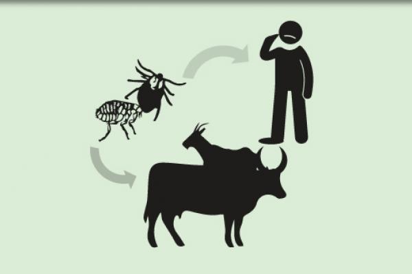 با بیماری تب کریمه کنگو و علائم آن بیشتر آشنا شوید