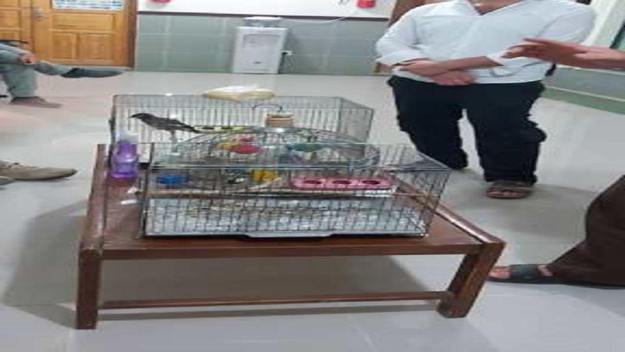 رهاسازی پرندگان در بازار پرنده فروشی دشتستان