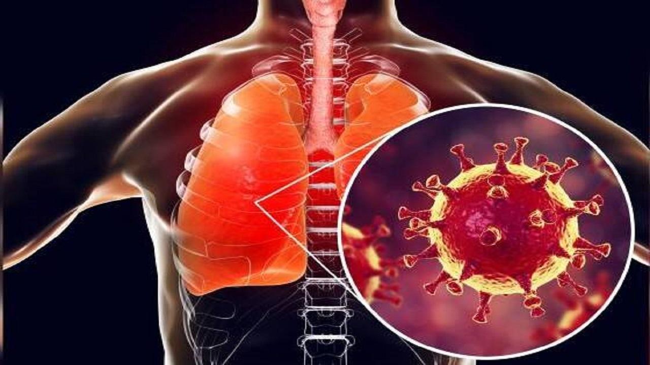 غذاهای مناسب تقویت ریهها در روزهای شیوع کرونا