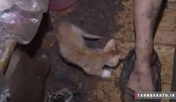 نجات دختر روس از زندگی گربهای + تصاویر