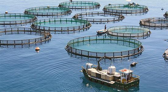 مرکز تولید و تکثیر ماهیان دریایی راه اندازی میشود