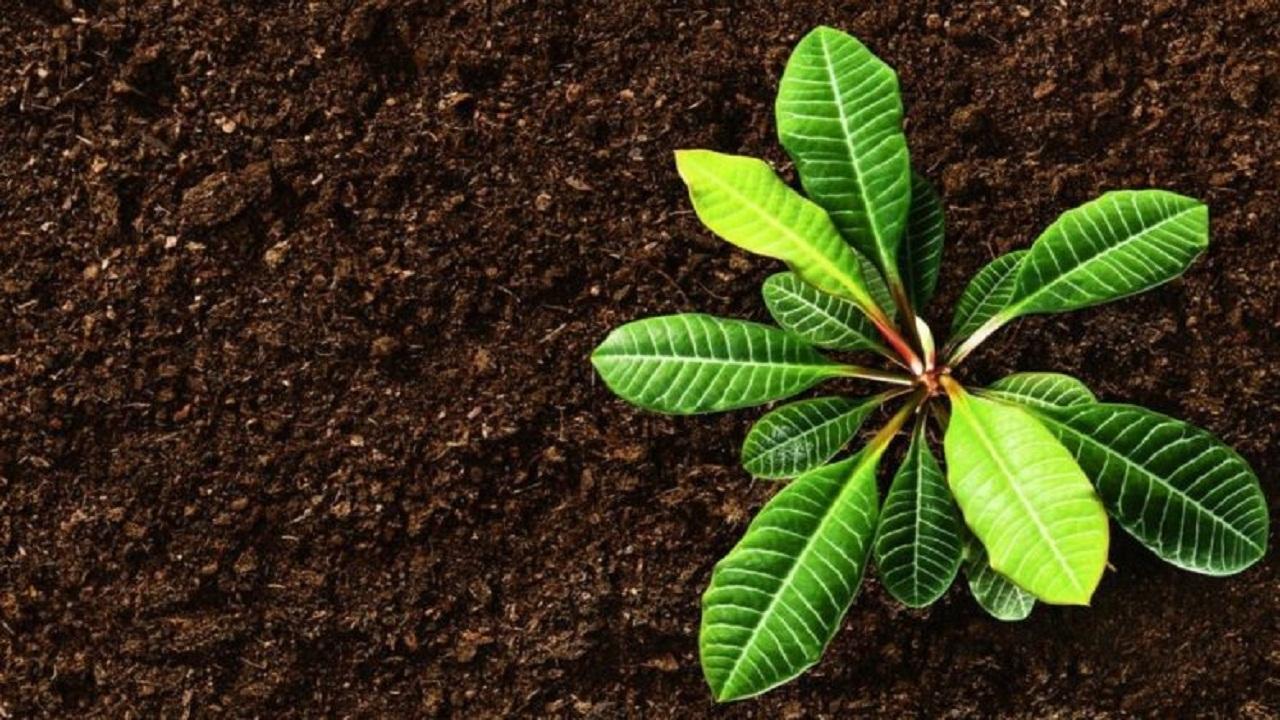 ضربان حیات اقتصاد در رگ های کشاورزی خراسان رضوی