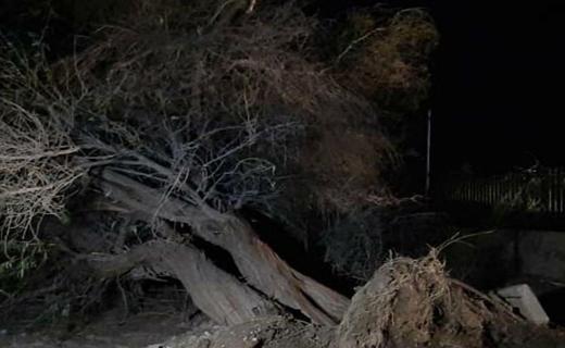 از ریشه درآمدن درختان در گل مورتی شهرستان دلگان بر اثر توفان شدید