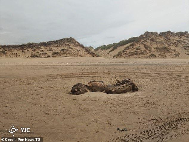 جانور عجیب در ساحل دریا