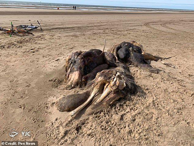 پیداشدن جانور عجیب الخلقه در ساحل دریا!