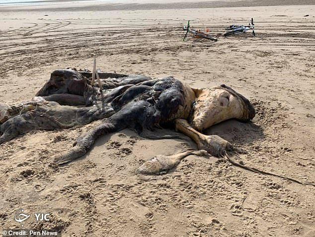 جانور عجیب الخلقه در ساحل دریا