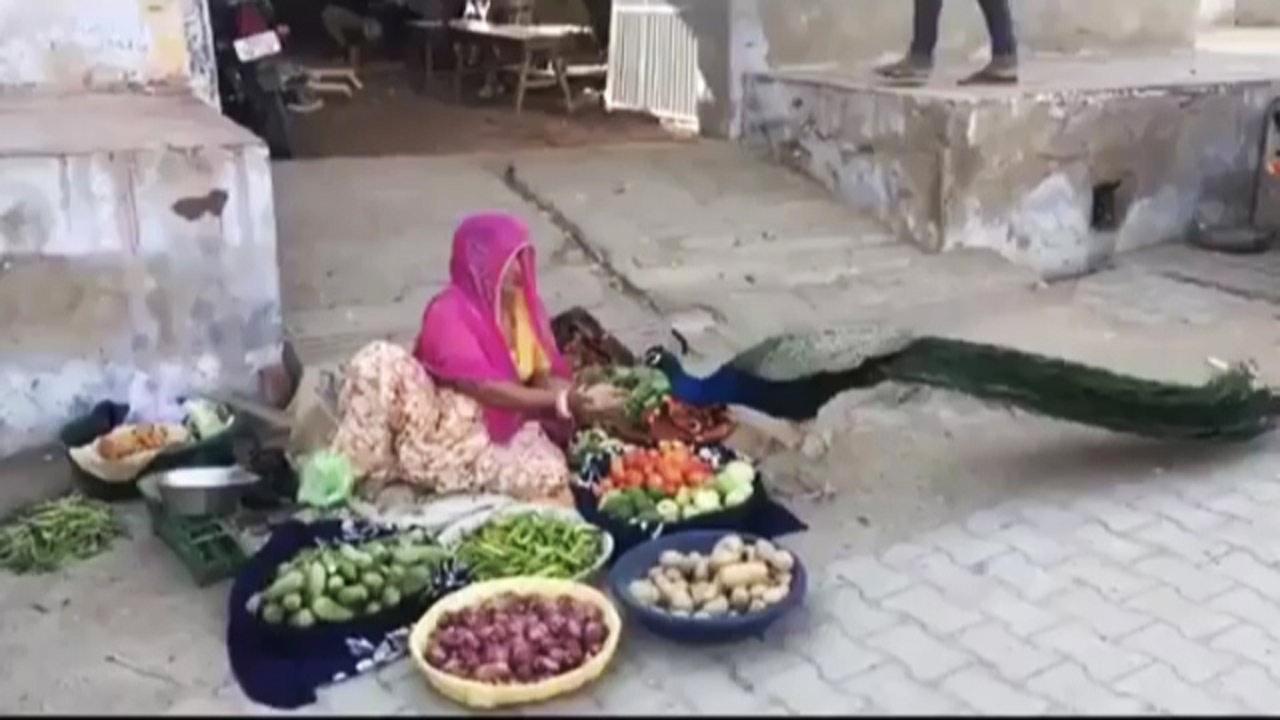 ایالت راجستان هند